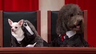 Bond v. United States - #RealAnimalsFakePaws #PuppyJustice