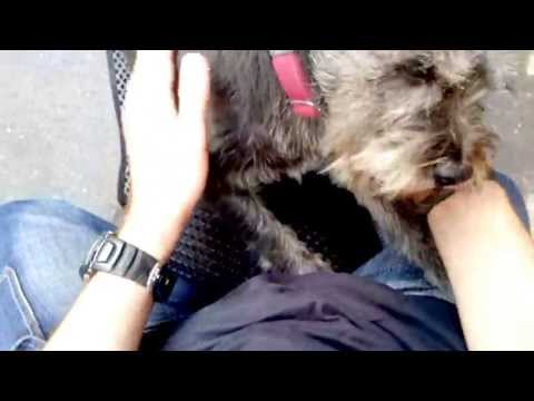 Dog Cries when Reunited with Owner