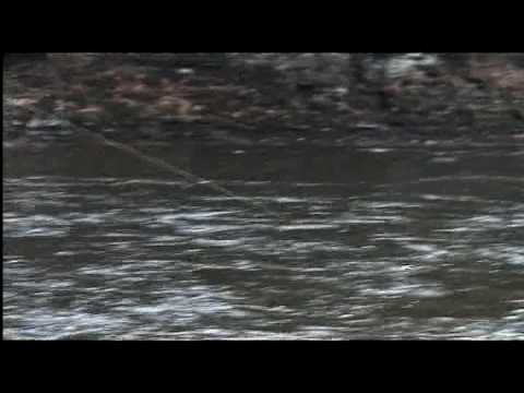 Steelhead fly fishing salmon river new york youtube for New york out of state fishing license