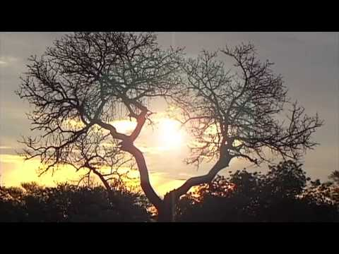 South Africa's Wildlife Zhep tours & Travel Video Guide online