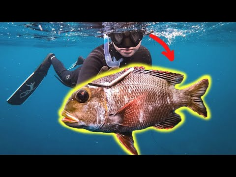 My Girlfriend Spearfishing Her First Mu!!! CATCH AND COOK {Coconut Crusted Fish!}