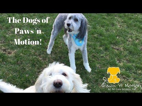 Recent pets of Paws 'n Motion KC Pet Care Services, LLC