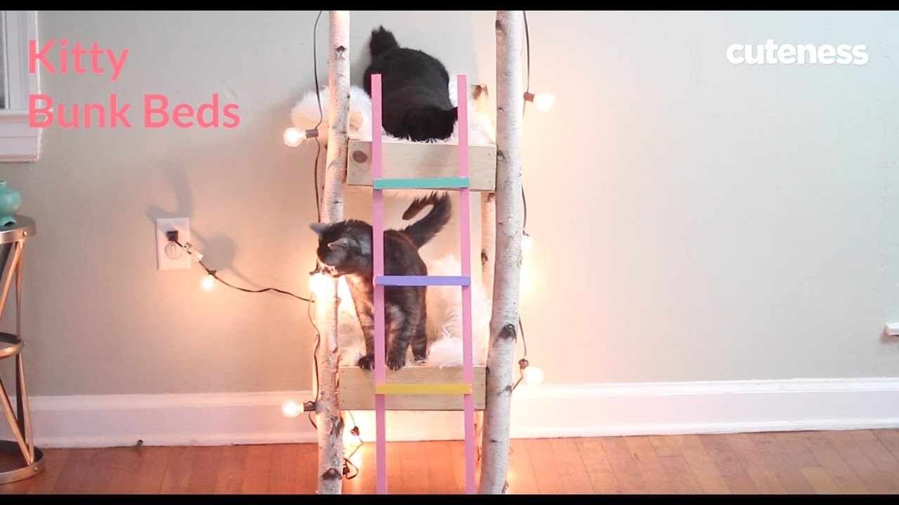 how to make kitty bunk beds cuteness com youtube