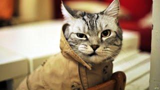 �������� ���� Мой кот - лучший кот, он любит хип-хоп )) ������