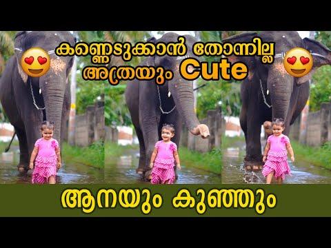 Kerala Elephant and a Cute Girl  | Bhamakkutty tiktok compilation | Baby Bhama Saraswathi  \u0026 UmaDevi