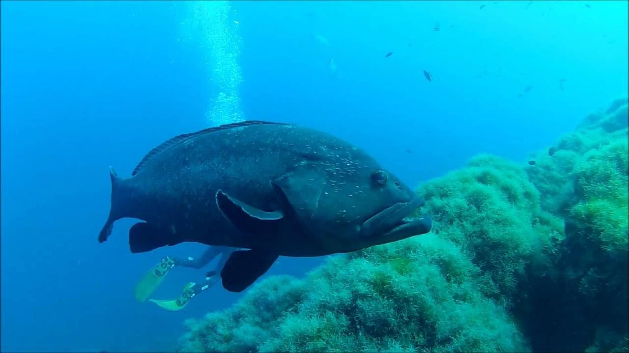 Offshore Scuba Diving Azores Ponta Delgada Best Spot