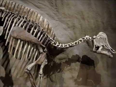 Royal Tyrrell Museum - Drumheller Alberta Canada - Dinosaur Museum