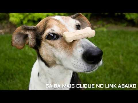 Biscoitos naturais para cães