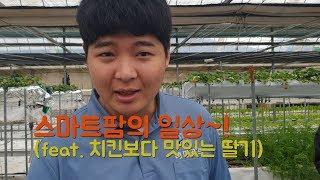 스마트팜의 일상~!(feat. 치킨보다 맛있는 딸기)