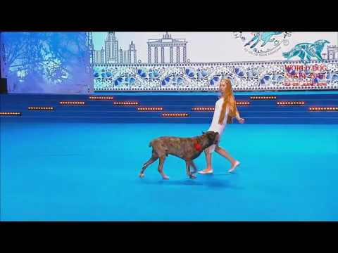 FCI Dog dance World Championship 2016 –Heelwork to music final - Rubleva Natalia and Rein (Russia)
