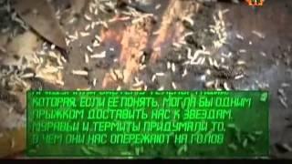 видео Загадка муравьев атта и телепортация