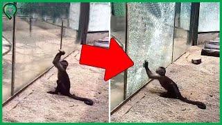 10 Chú Khỉ Có Trí Thông Minh Siêu Đẳng Ngang Ngửa Con Người Chắc Chắn Bạn Sẽ Bất Ngờ | Top 10 Thú Vị