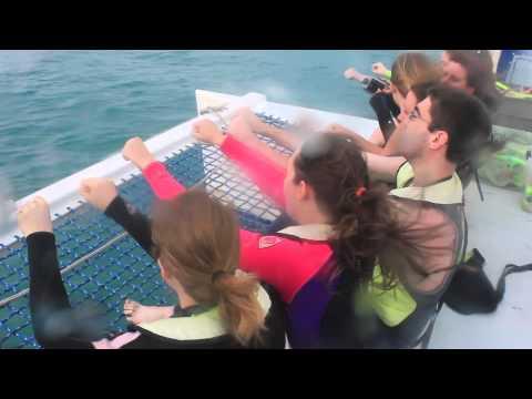 Marine Bio Update 7 - Open Ocean Snorkel