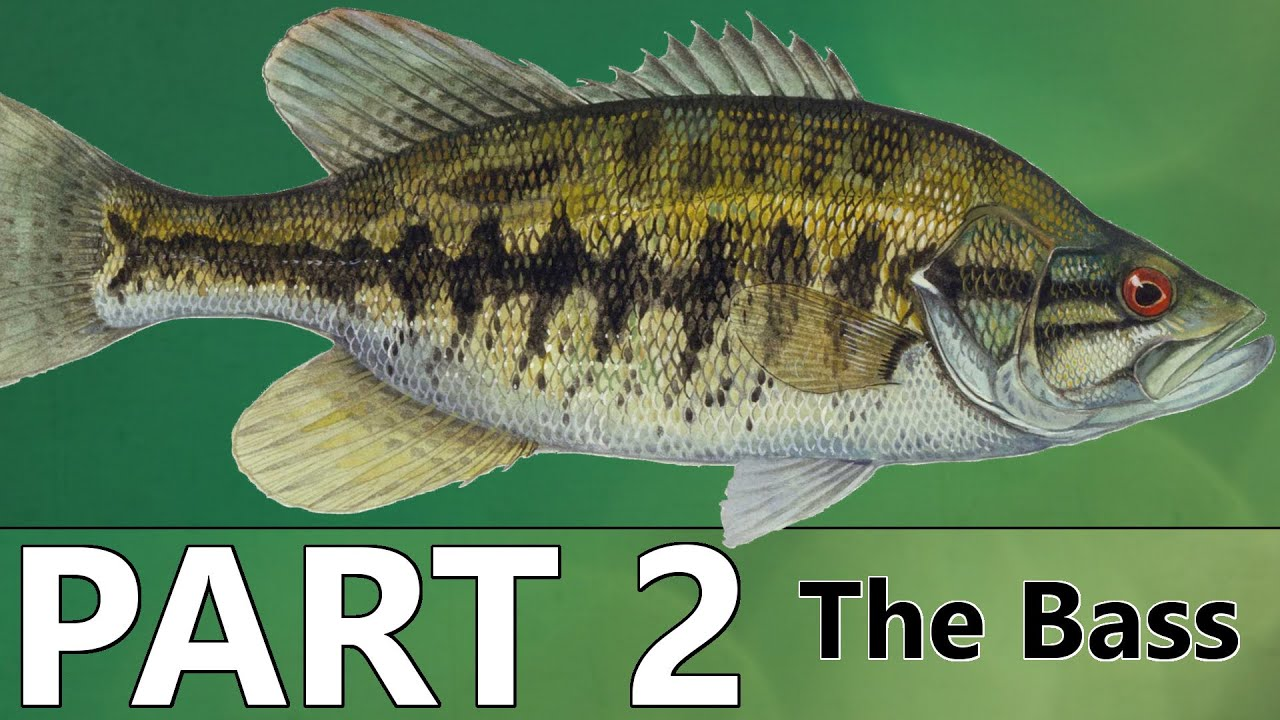 Beginner 39 s guide to bass fishing part 2 the bass youtube for Bass fishing for beginners