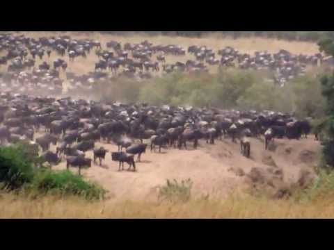 Africa's Great Migration, Masai Mara, Kenya