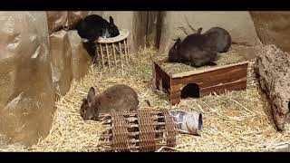 Кролик гребет сено лапками