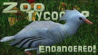 Endangered! Call Of The Kagu Crane! - Episode #44