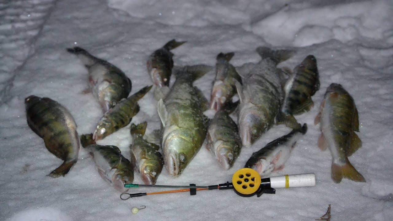 Как ловить судака зимой. Ловля судака, берша зимой. Зимняя рыбалка