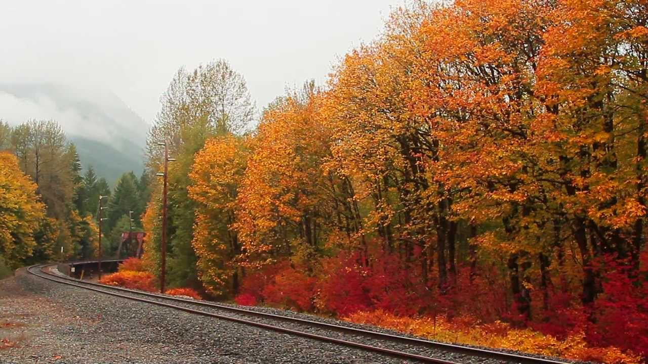 Dazzling autumn colour displays | National Trust