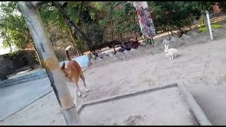 Crazy dog n danger rabbit frndship