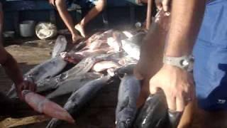 OMAR - Pesca sub no Maranhão