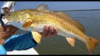 Louisiana Redfish PreFishing for FLW Tournament in Venice Louisiana