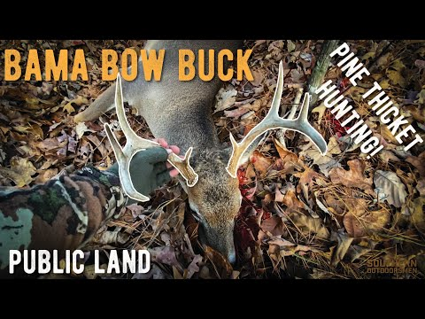 Hunting Pine Thickets - Alabama Bow Buck DOWN! Public Land Bowhunting