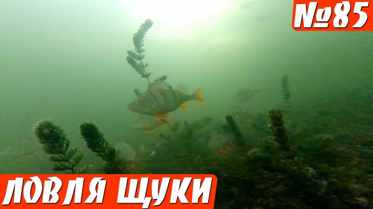 Щука на Раттлин. Подводные съемки. Зимняя рыбалка 2019