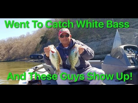Crappie Crash Our White Bass Party
