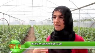 Kadın girişimci serasında sebze yetiştiriyor