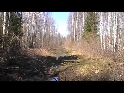 видео: Как мы встретили медведя