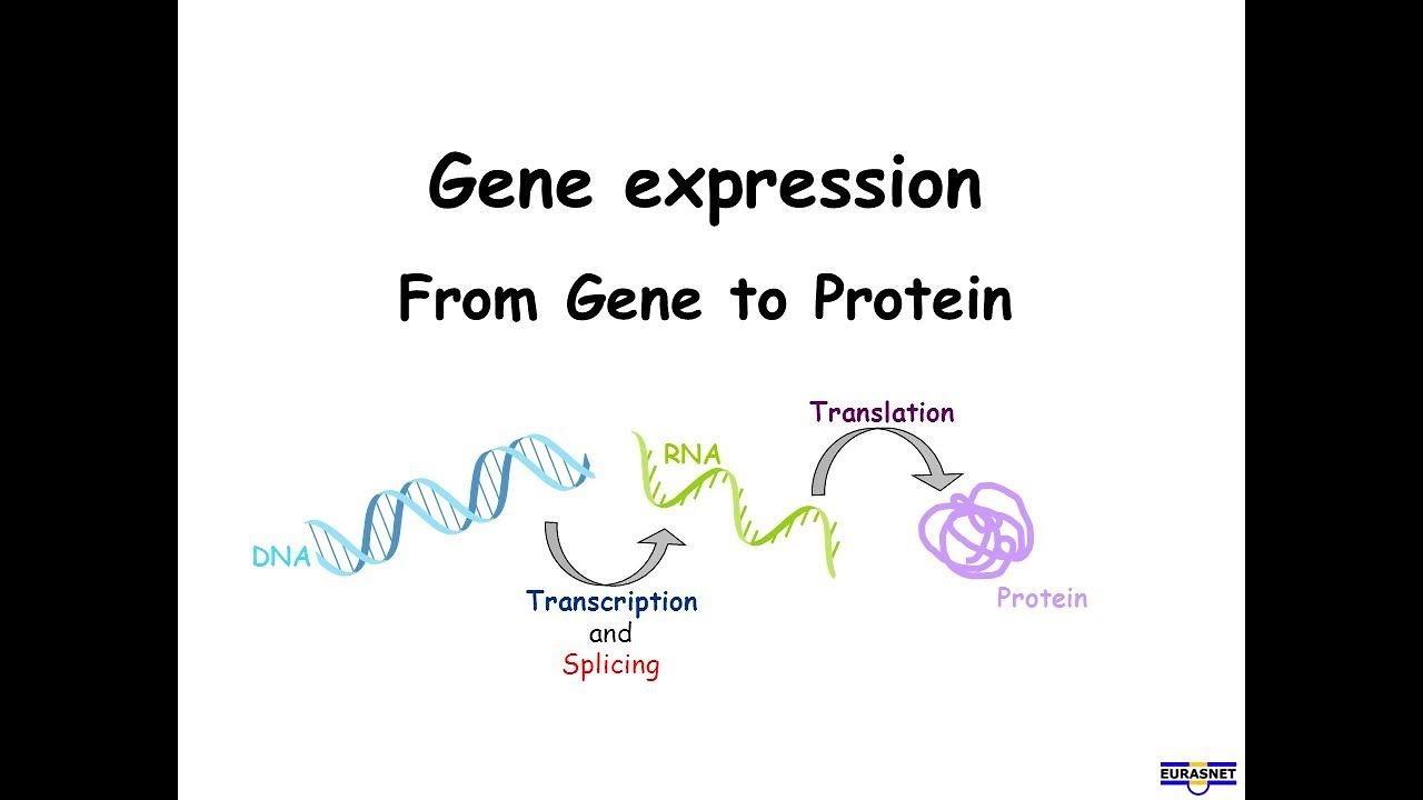 bio chapter 17 notes gene expression Now is the time to redefine your true self using slader's free modern biology answers shed the societal and cultural narratives holding you back and let free step-by-step modern biology textbook solutions reorient your old paradigms.