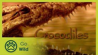Crocodiles  The Whole Story S01E05  The Secrets of Nature