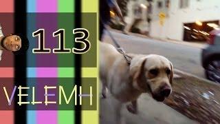 США Простая Америка #113 Собаки в LA