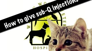 How to give sub-Q injections to your pet