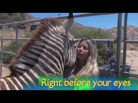 Meet Candi Cane Cooper  Animal Communicator  Horse Whisperer  Dog Whisperer