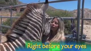 Meet Candi Cane Cooper / Animal Communicator / Horse Whisperer / Dog Whisperer