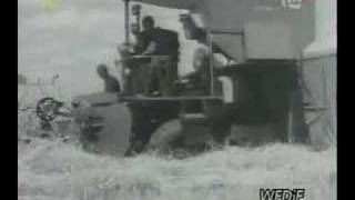 Żniwa 1950
