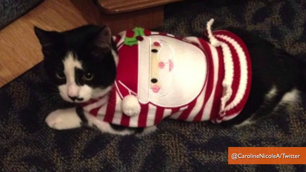 38 Cats Who Make Ugly Christmas Sweaters Cute - YouTube