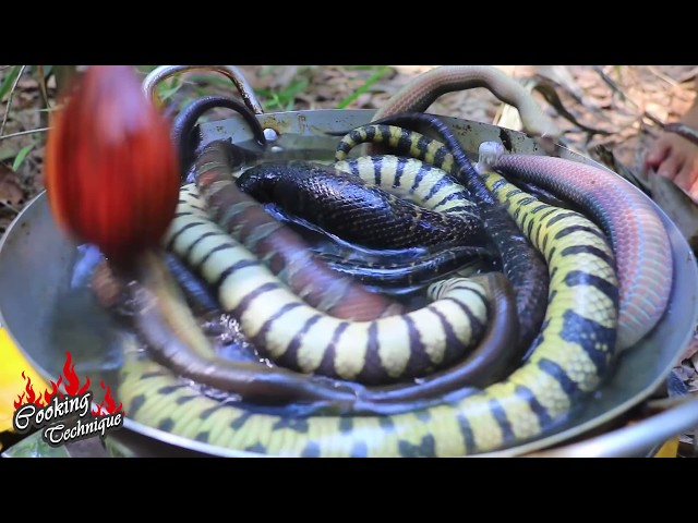 Wow! Snakes In Big Fish Stomach and Then Cooking Snakes Eating In Forest (Real 100%)
