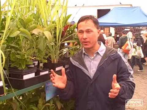 Alemany Farmers Market-  A Great Source for Rare Plant Starts