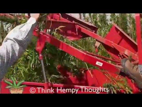 Harvesting Industrial Hemp Variety Trials- Roblin, Manitoba, Canada