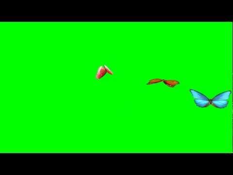 Best Animated Butterflies, Flying Butterflies (Green Screen) HD