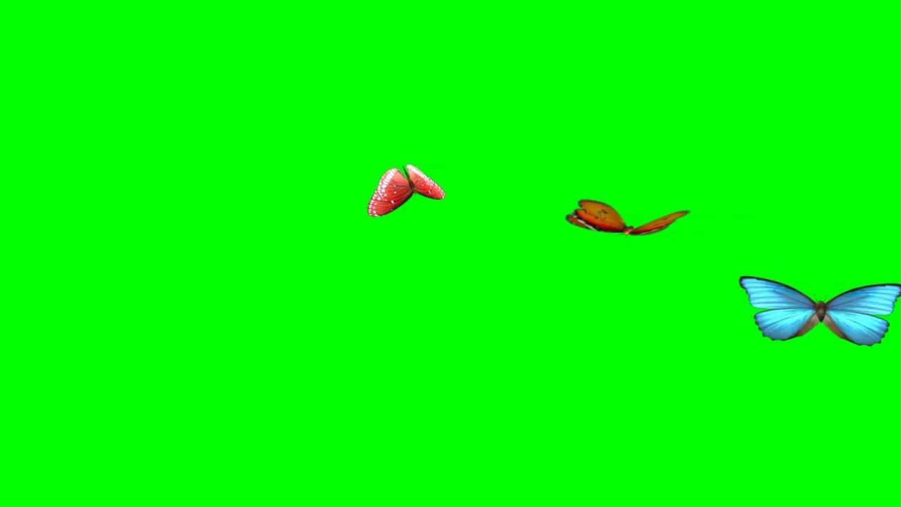 Best Animated Butterflies Flying Green Screen HD