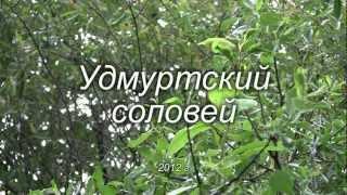 Удмуртский соловей