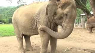 Do you know what makes an elephant feel good