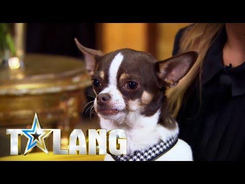 Bianca Ingrossos hund Dino ylar till Army of lovers-låt i talang - Talang (TV4)