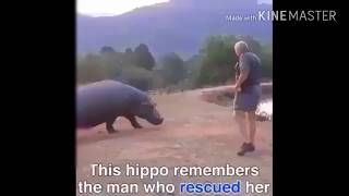Ekspresi kudanil ketika bertemu majikan nya