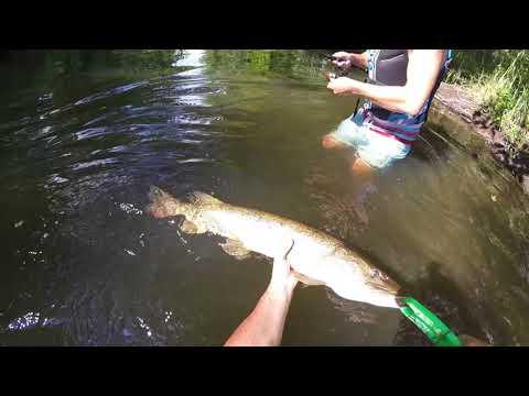 Huron River Pike Wading Trip - Brighton Michigan