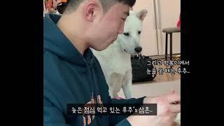 음식에 진심인 진돗개 모습ㅋㅋㅋ / 부담스러운 강아지 …